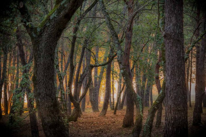 Autumn Forest Verdon